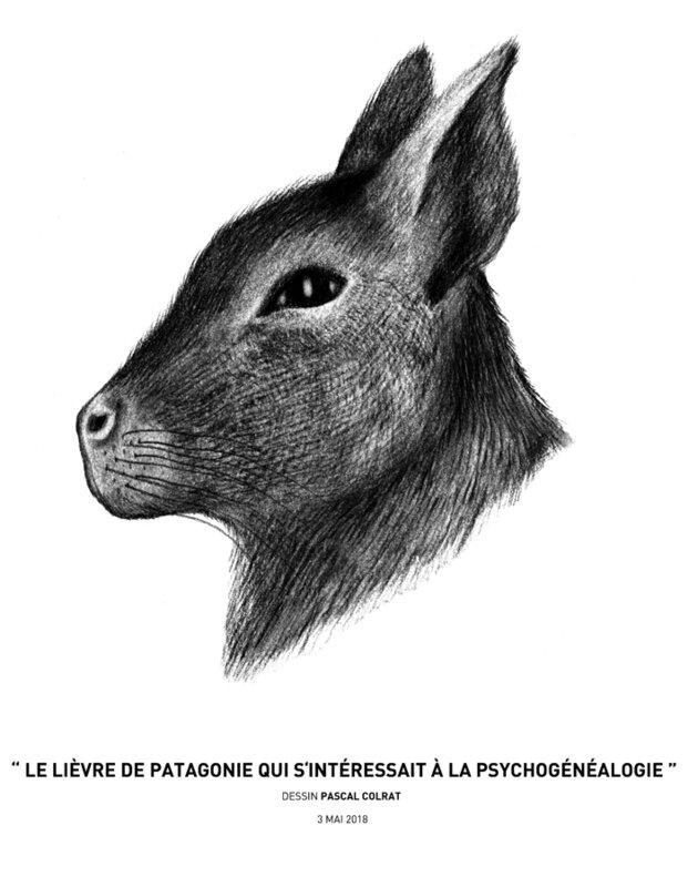 __le_lie_vre_de_patagonie_qui_sinteressait_a__la_psychoge_ne_alogie__