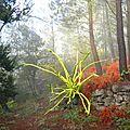 arbre sylvart dans le broullard d'automne